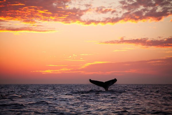 Whales Watching In The Turks And Caicos