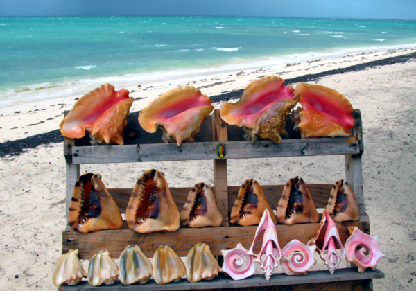 Conch Turks And Caicos