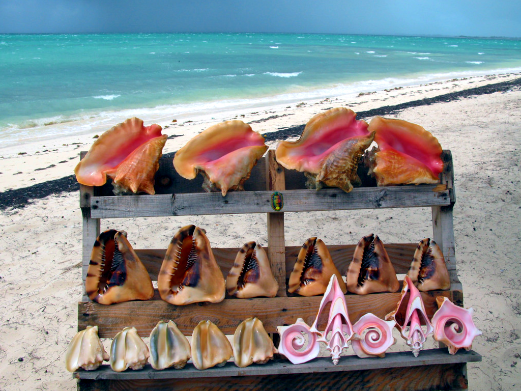 Don't Miss This Year's Turks And Caicos Conch Festival
