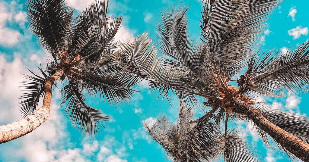 Summer Vacation Trade Winds
