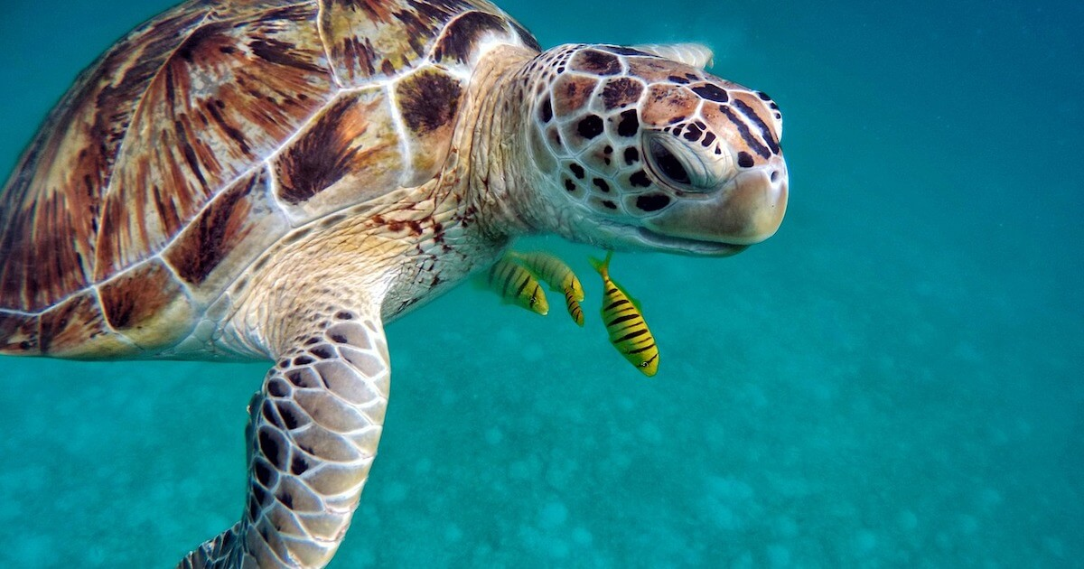 We have some the best beaches in the world for snorkeling and reef diving.