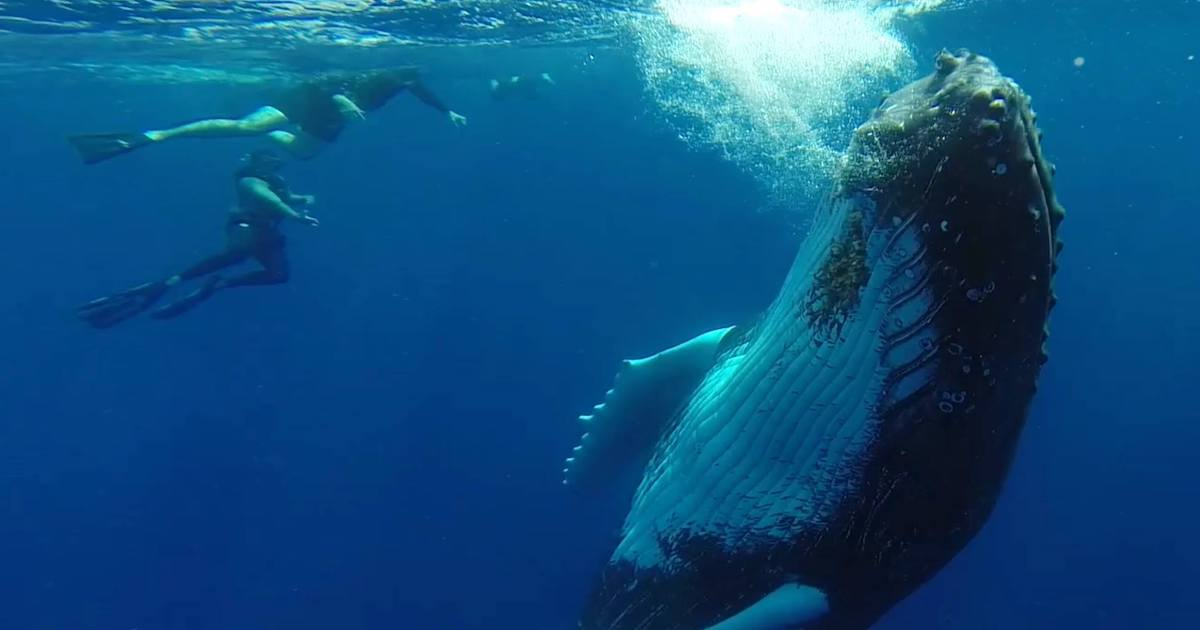 Big Blue Collective offers whale watching in Turks and Caicos